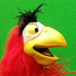 Iago Parrot