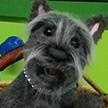 Toto Terrier