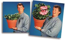 Plant Puppet by Axtell Expressions