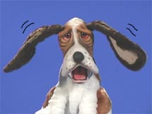 Bogart the Basset Hound Puppet with Raising Ears