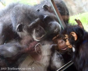 Ape Puppets by Axtell Expressions