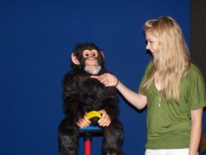Zillah with her Hands-Free Chimp