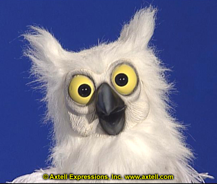 White Owl by Axtell Expressions